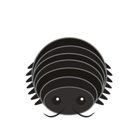 Link to animaru Woodlouse
