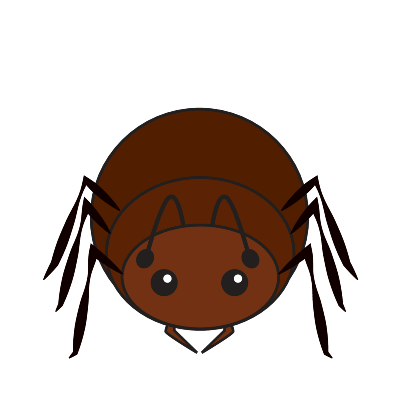 animaru Ant