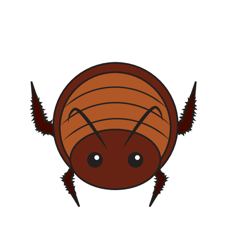 animaru Cockroach